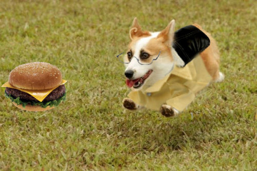 artemisfoxcoon:  rinata-chan:  It's corgi!Alfred! This is for artemixfoxcoon since we've been having an ask box war for the last hour or so XD THIS IS WHAT YOU MISSED OUT ON! You could of had this but no, you chose the sleeping Corgi! XD Me+Photoshop=Bad idea haha  GOD WHY?! WHY DID I PICK THE SLEEPING ALFRED CORGIIIII?!   ………. OAO………… *WANT WANT WANT WANT WWWAAAANNNTTTT QAQ *