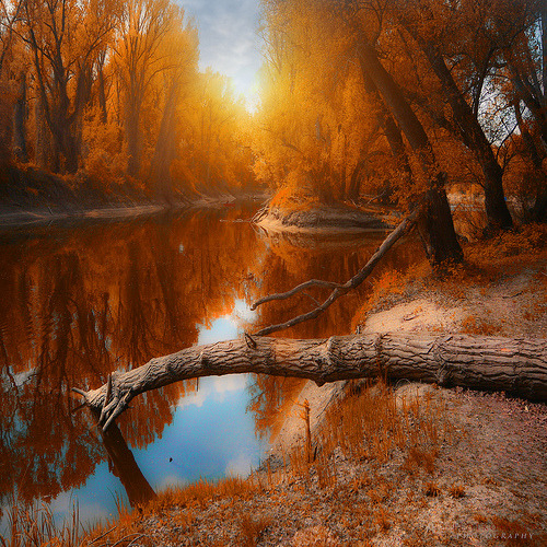 llbwwb:  autumn in the air - Breathtaking! 10/09/11 (by azegbenbalvan)