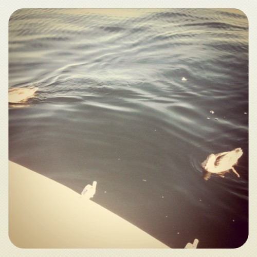 Dinner guests on the lake (Taken with instagram)