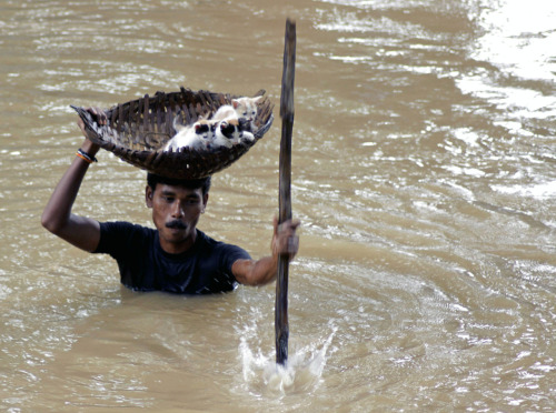 joyousgard:  A man braves a flood in Odisha, India to save a cat and her kittens