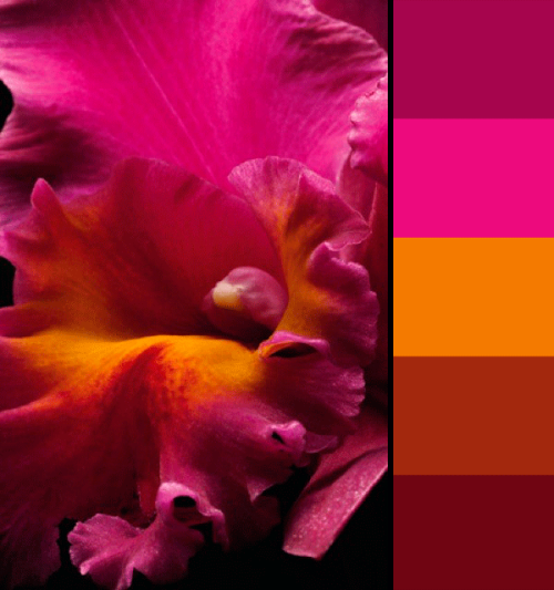 such a fun color combination! (from Bloom magazine, via Jonathan Lo on Pinterest)