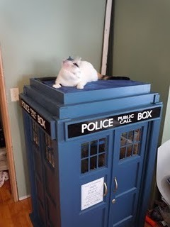 CAT GET DOWN FROM THE TARDIS YOU ARE NOT THE DOCTOR YOU AREN'T EVEN A TIME LORD!
