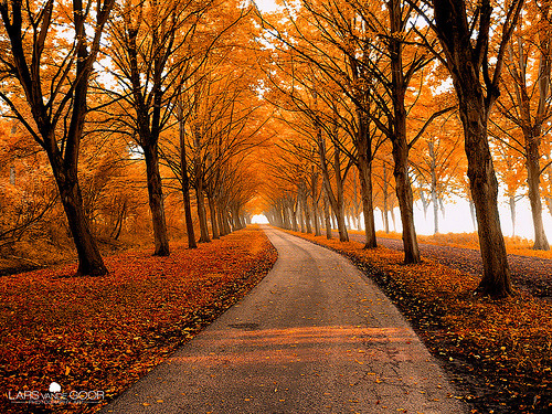 allthingseurope:  Autumn in Holland (by larsvandegoor.com)