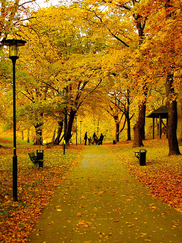 allthingseurope:  Stockholm in the fall (by Rikke Lind)