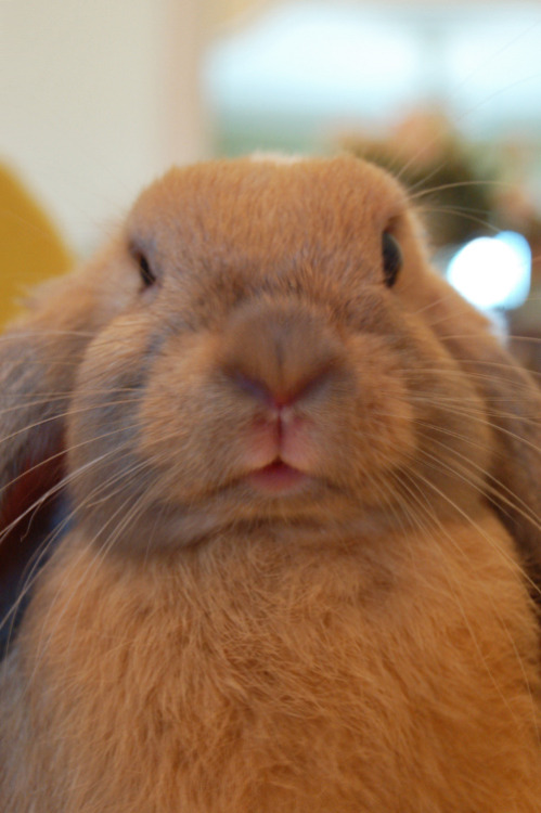 dailybunny:  Thanks, Carmen!
