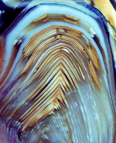 dazzlingagony:    Polished pebble of a fossil fern stem photography by Dirk Wiersma