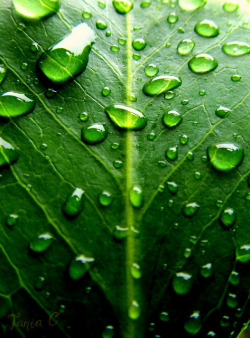 thewitchescauldron:  Green Leafs and Water Drops
