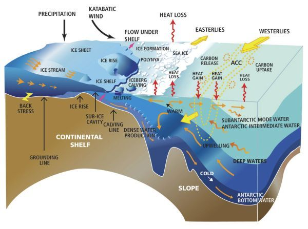 Fig. 2.5 in Polar Research Board. Future Science Opportunities in Antarctica and the Southern Ocean. NAP (2011): Cartoon of Southern Ocean circulation and glaciological processes occurring on the coast of Antarctica.