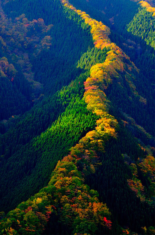 dazzlingagony:  Namego Valley, Tenkawa Mountain, Japan