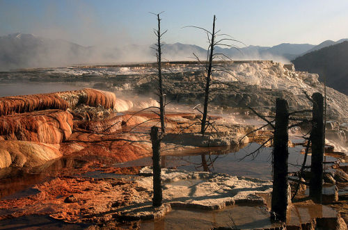 rhamphotheca:  Mammoth Hot Springs is a large complex of hot springs on a hill of travertine in Yellowstone National Park in the United States. It was created over thousands of years as hot water from the spring cooled and deposited calcium carbonate. Algae living in the warm pools have tinted the travertine shades of brown, orange, red, and green. (Photo/text: Mila Zinkova)