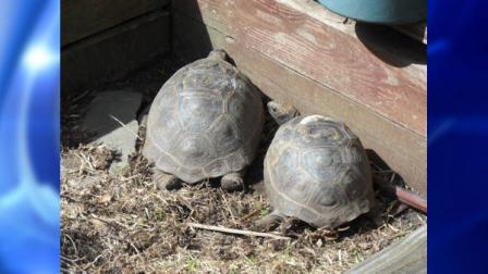 New Jersey News Huge tortoises seized from NJ home, taken to zoo