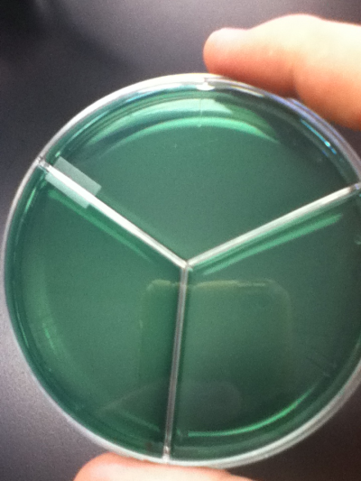 Uninoculated Simmon's Citrate agar plate.