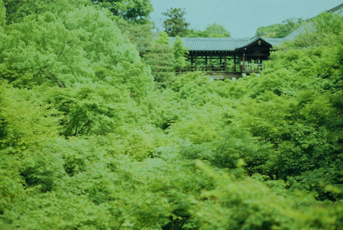 japanlove:  東福寺 通天橋 by nijntjee on Flickr. green everywhere!