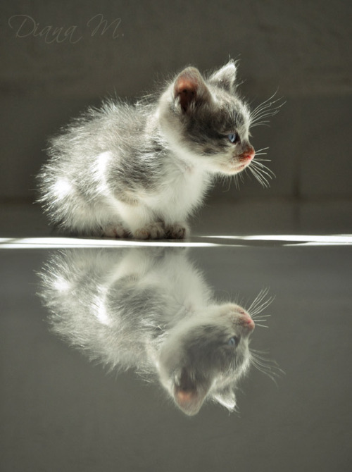 magicalnaturetour:  Feline Reflection by *ladyspuky :)