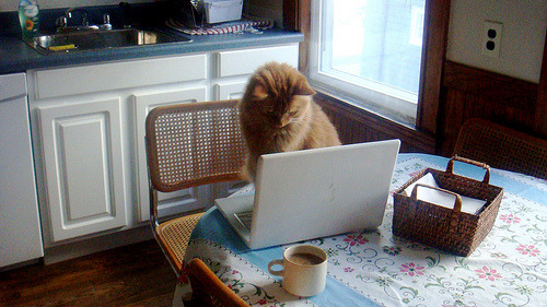Some cats prefer working from home. Photo by ©heidilikescake