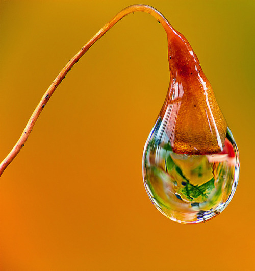 Autumn Drop on Flickr.