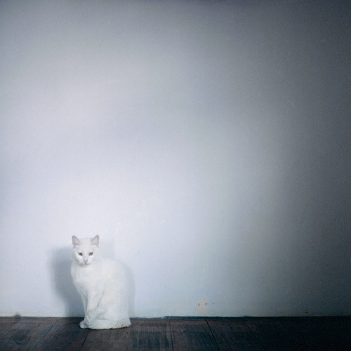 arreter:  Chat Blanc (by memetic)