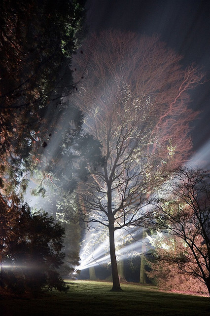 enchantedengland:     Night shot of Sheffield Park Garden, an informal landscape garden in East Sussex, England. Not to be confused with the previously mentioned city of Sheffield, South Yorkshire, England; where iron and trees grow freely together in harmony. There is also a small settlement called Sheffield way on down near Land's End in Cornwall, in the southwestern peninsula that juts off England.  Antony Scott flickr