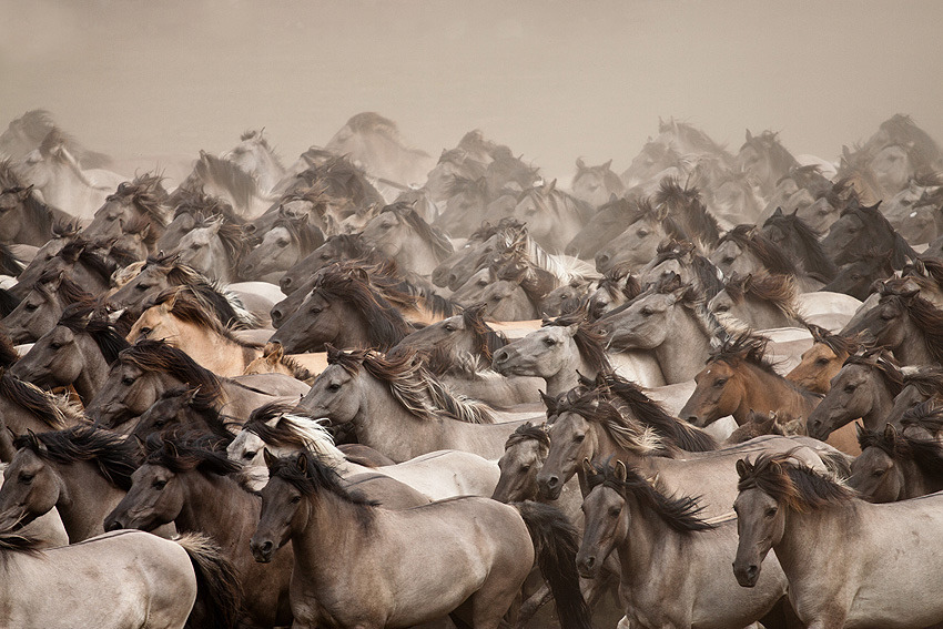 "walkingdrum:  (""Wild Horses"" by Stefanie Lategahn)"
