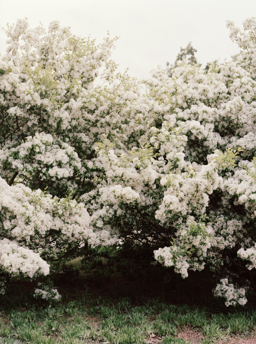 misswallflower:  danielseunglee:  Washington, D.C.