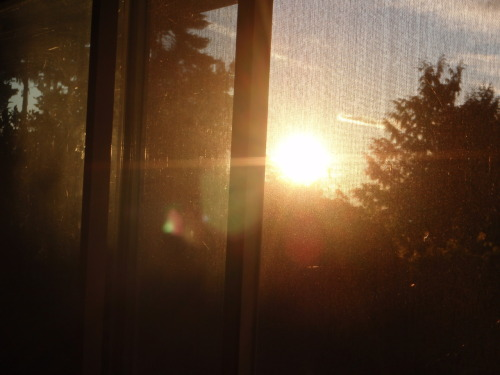 Sunset through the screen door.