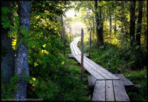 agoodthinghappened:  Wooden Path Among The Trees by Olli Malmivaara Photography on Flickr.
