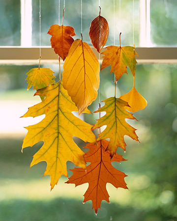 When dipped in wax, colorful leaves can be preserved through this season  and beyond. We clustered a group to suspend in a window - perfect for  greeting visitors. Stands of monofilament keep them from falling a  second time. Read more at Marthastewart.com: Hanging Leaves - Martha Stewart Crafts
