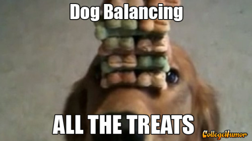 Dog Balancing All the Treats - click to watch