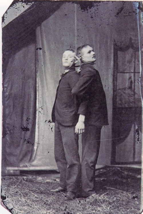 tuesday-johnson:  ca. 1890, [two friends hanging together] via Not on Your Tintype: Collection of American Tintypes, Vol. 1, Andrew Daneman