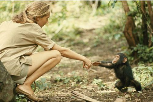 baron hugo van lawick - jane goodall and flint, 1965 explore/donate: the jane goodall institute