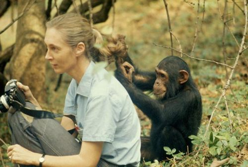 derek bryceson - jane goodall and freud, 1979 explore/donate: the jane goodall institute