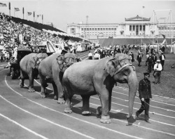 Circus enters Soldier Field for Labor Day, c. 1927 The Chicago Federation of Labor (CFL), a major union, hosted some spectacular Labor Day celebrations at Soldier Field in the 1920s. Edward N. Nockels, the CFL's secretary, wrote this letter advertising the 1927 festivities. For $1, people could see soccer and boxing matches, a circus, and airplane stunts all at Soldier Field. Kids, adults, and even a few elephants sometimes marched into Soldier Field for the Labor Day revelry. Want a copy of this photo?  > Visit our Rights and Reproductions Department and give them this number: ICHi-64210. Connect with the Museum