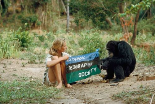baron hugo van lawick - jane goodall and david, 1962 explore/donate: the jane goodall institute