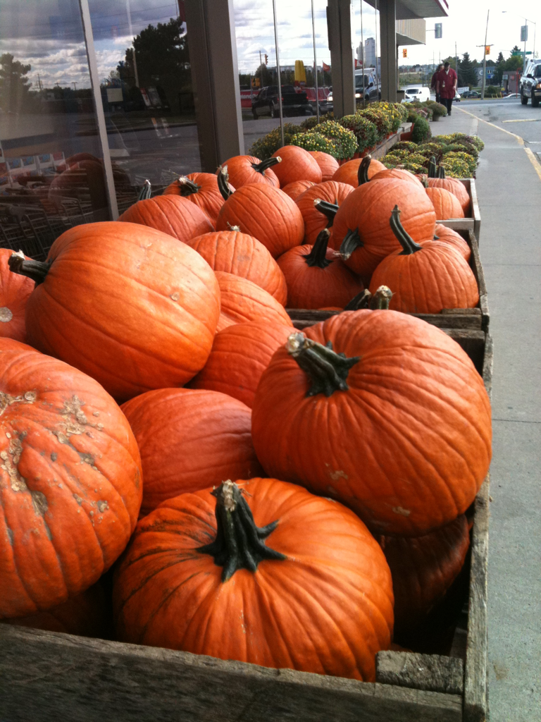 yournotaduck:  Pumpkins!!!!!!! So excited for pumpkin carving!!