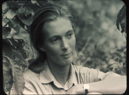 baron hugo van lawick - jane goodall, 1964 explore/donate: the jane goodall institute