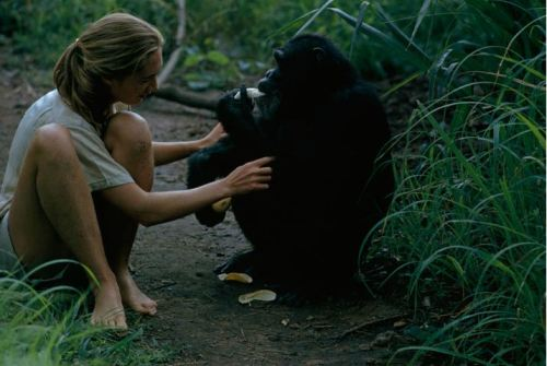 vanne morris-goddall - jane goodall with david, 1963 explore/donate: the jane goodall institute