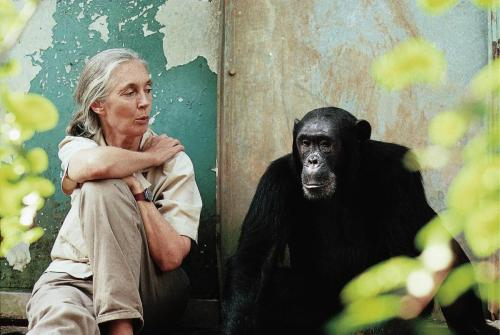 jane goodall and freud explore/donate: the jane goodall institute