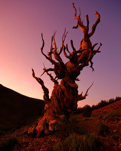 llbwwb:  Gnarled old Tree (via Jeff Swanson | Smashing Picture)