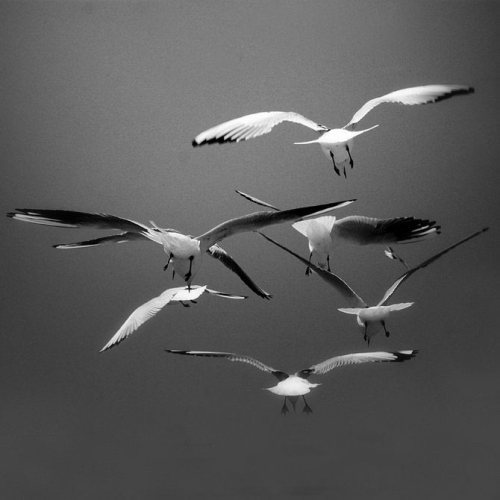 Very pretty light on them. black-and-white:  (via Qin YongJun)