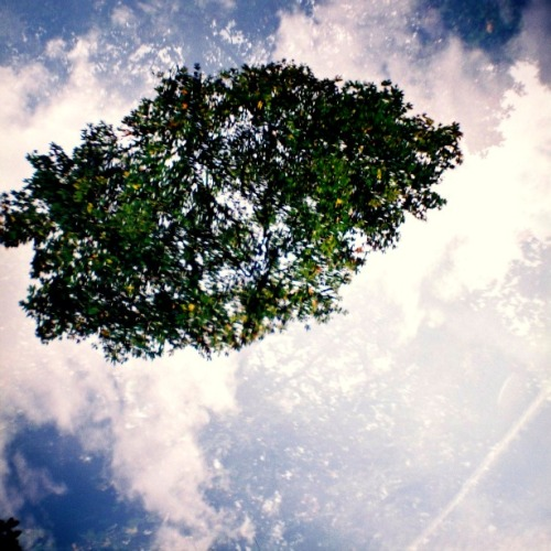 Summer tree, Bristol, August 2011 Multiple-exposure