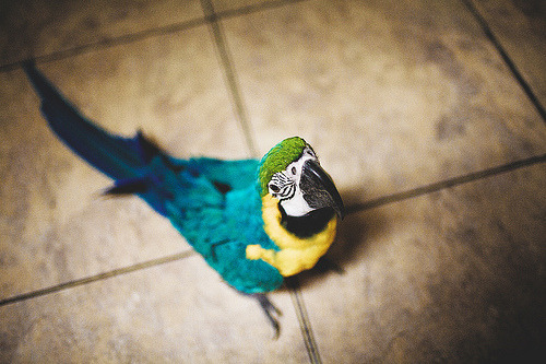 lace-bird:  =O by Nick Storniolo, on Flickr.  Look at these gorgeous colors! ;_;