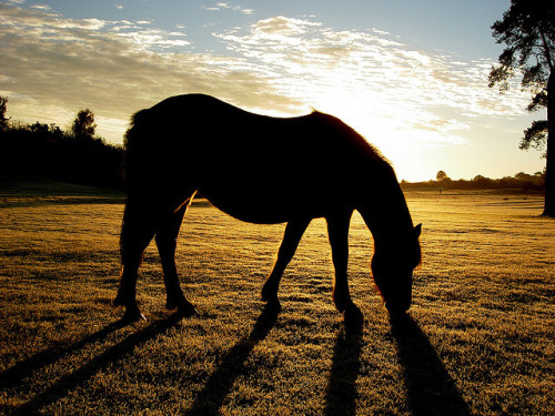18thapril:  Pony silhouette by Hayleyho on Flickr.