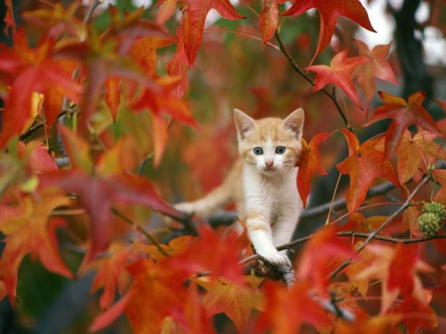 Surrounded by autumn