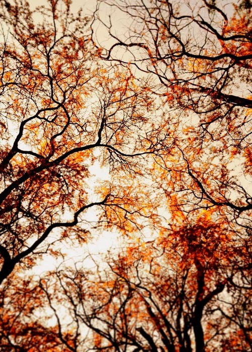 marleyandme:  Fall makes my heart excited.