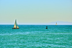 'Come Sail Away' Sailboats circle the Santa Barbara pier on a beautiful day, while the Channel Islands rest on the horizon.  Wind energy.