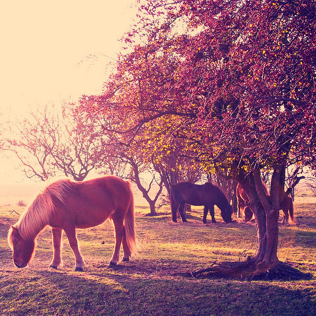 spaceherosuit:  i found horses by Esben Bøg on Flickr.