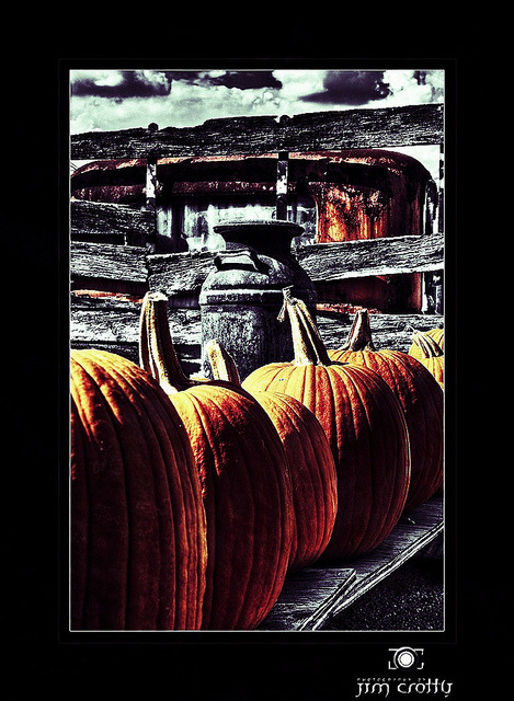 Pumpkin Truck by Jim Crotty on Flickr.Season's haul
