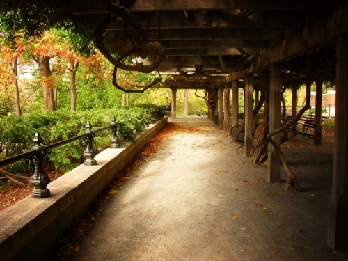 "Wisteria pergola in autumn. Central Park, New York City   In the stillness of well-worn paths, autumn stretches its well-adorned limbs exhaling brisk, cool breaths that kiss the faces of wanderers.   —-  View this photo larger and on black on my Google Plus page  —-  Buy ""Peaceful Autumn Landscape - Central Park New York City"" Cards, Prints and Posters here, View my store, email me, or ask for help."