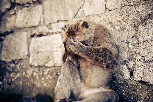 prevailing:  Sad monkey (by Gimpz)  Aw why is monkey sad? Maybe monkey is ashamed of people