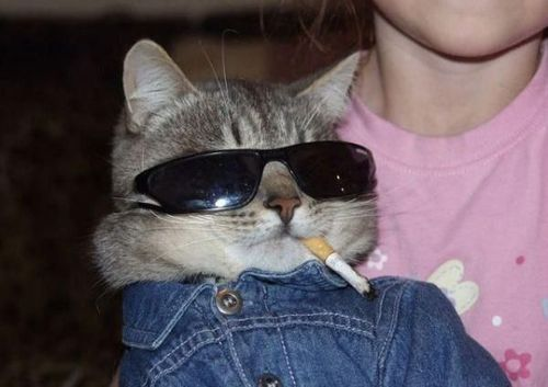 """Hey cat, there is no smoking in here."" ""I can't play by your rules, man. Kitty's got a hankering for some nicotine… ya feel?"" ""Are you going to put it out, or are you going to start trouble."" ""Trouble is my middle name."" ""I thought it was Melvin."" ""Quiet woman!"""